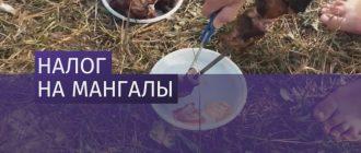В России введут налог на мангалы?